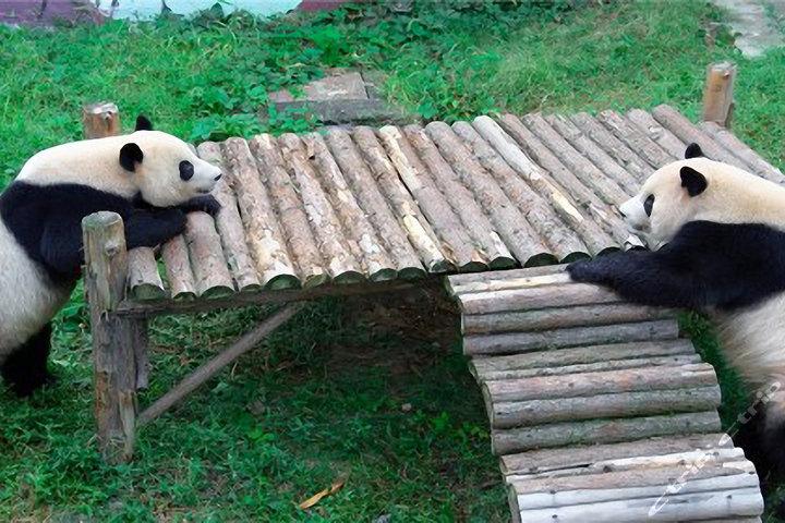 无锡动物园·太湖欢乐园门票1张