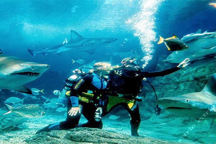 长风公园水族馆门票_长风海洋世界和上海水族馆,哪个比较好玩?-