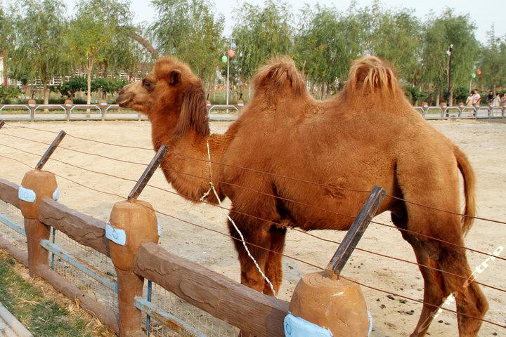 天津光合谷旅游度假区(门票 动物园门票)