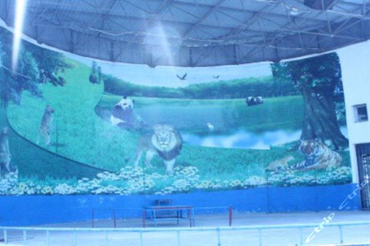宜昌三峡森林野生动物世界-成人门票-1张