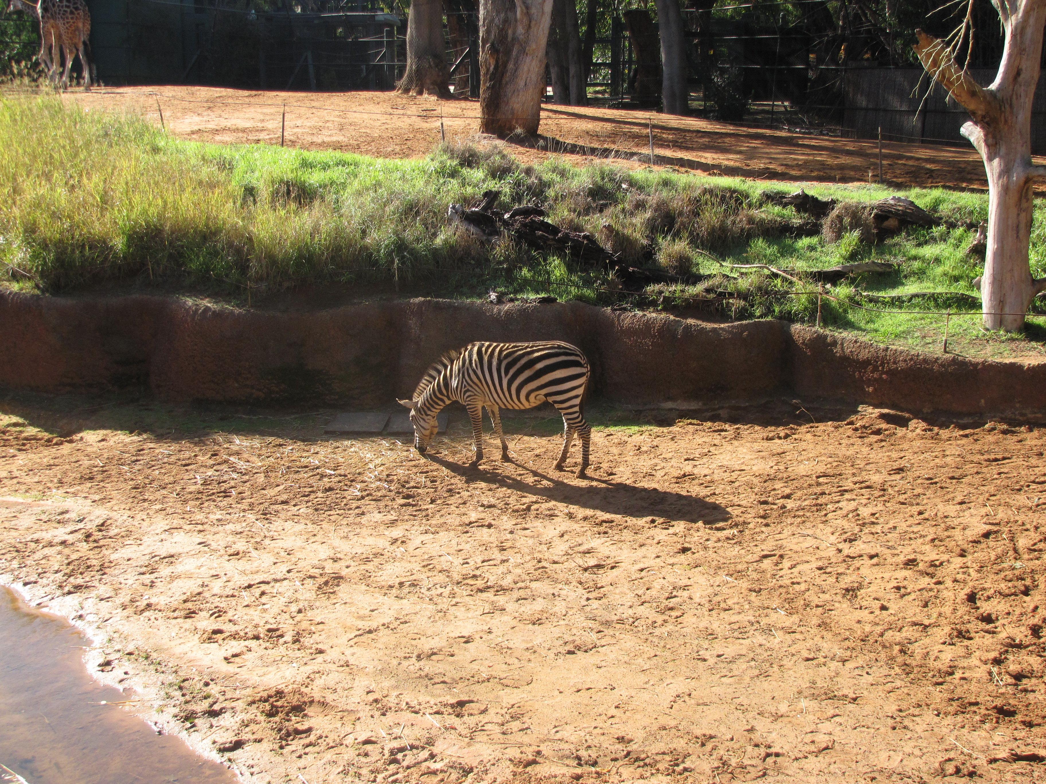 珀斯有一座设计奇巧的动物园