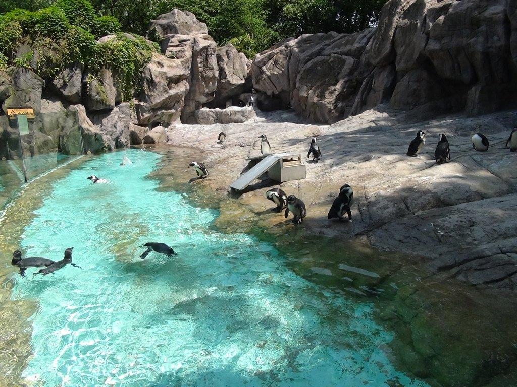 上海动物园门票多少钱