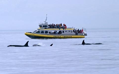 水上飞机,皮艇,拖船,帆船,渡轮和浮动博物馆 — 噢,对了,还有赏鲸船