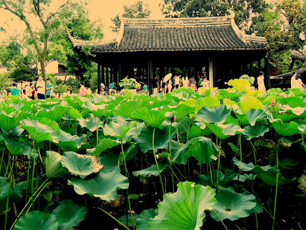 """穿过""""小飞虹""""——那是拙政园"""