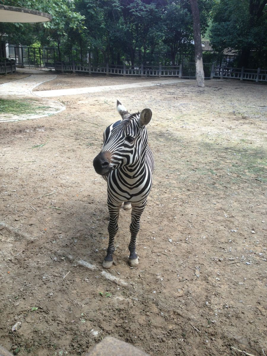 [i旅行]上海动物园亲子游