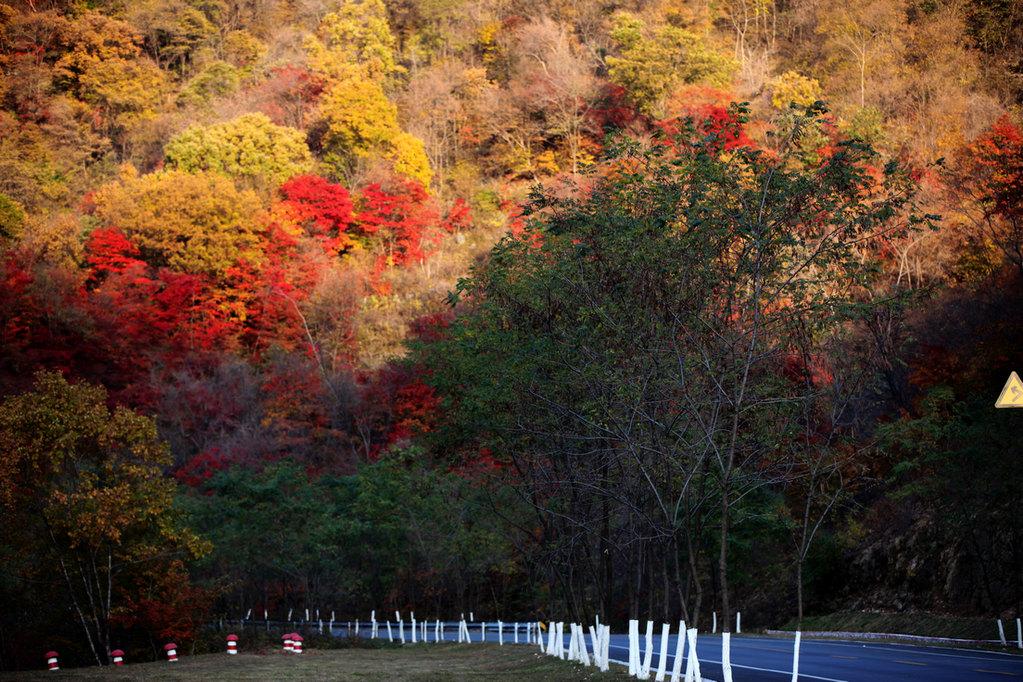 沈阳到丹东蒲石河国家森林公园一日游|看枫叶|蒲石河