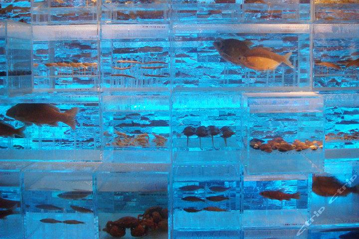 星期九农庄-鱼类标本图片