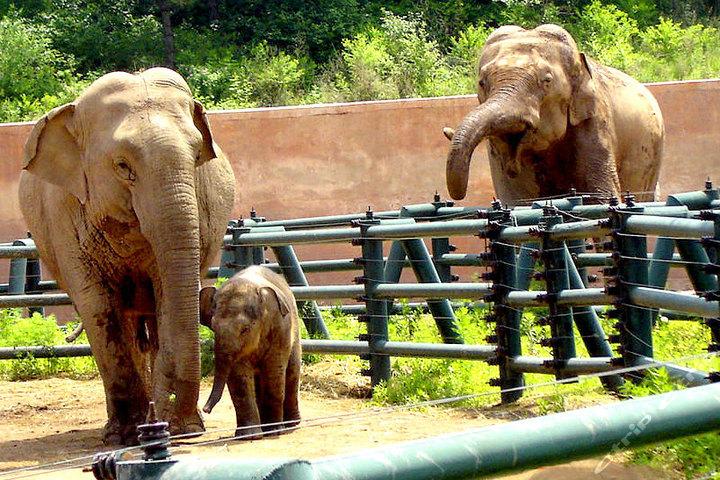 棋盘山森林野生动物园—大象