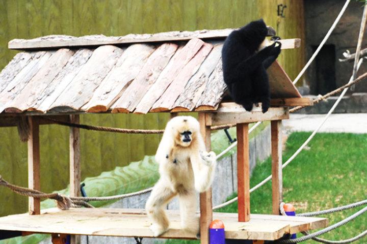 【森林动物园团购】大连森林动物园(官方电子票1张)