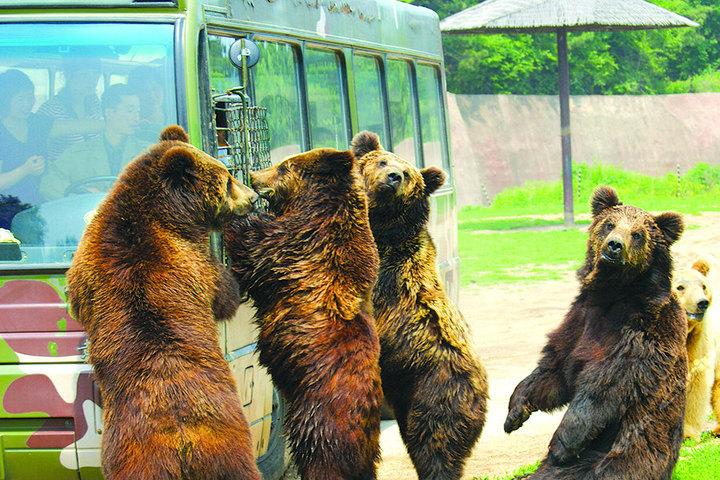 棋盘山风景区+森林野生动物园套票