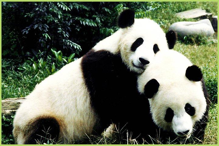 楼观台国家森林公园+秦岭四宝动物园套票团购-西安