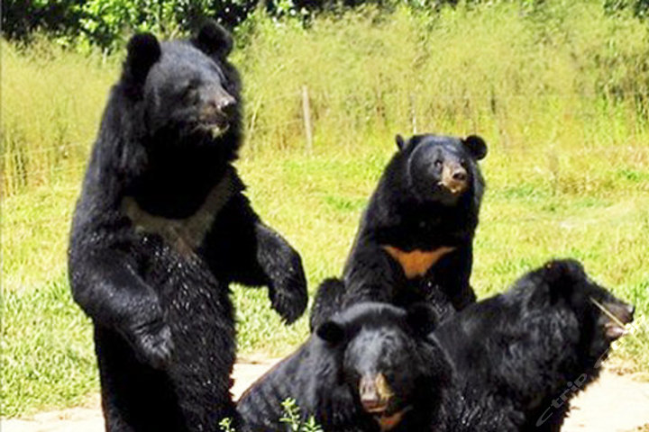 广州长隆野生动物园(长隆野生动物园家庭幸福自驾游