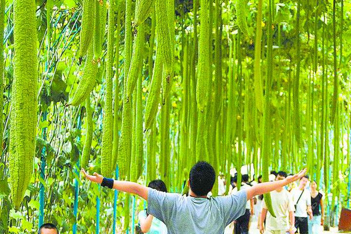 壁纸 垂柳 风景 柳树 树 植物 桌面 720_480