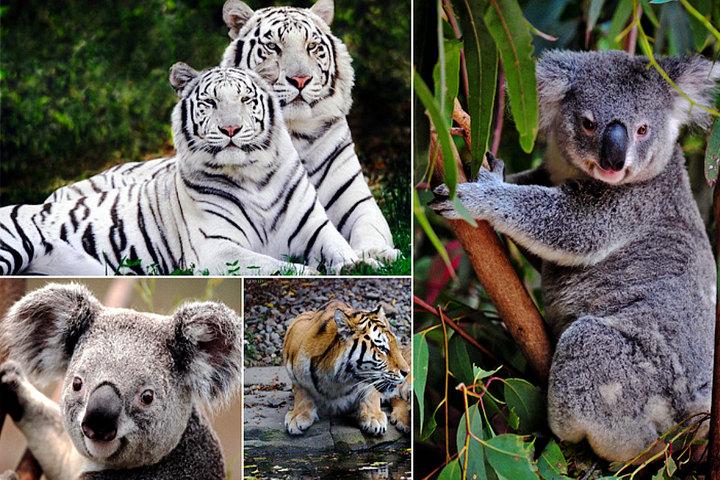 广州长隆野生动物园怎么去啊-广州长隆野生动物园