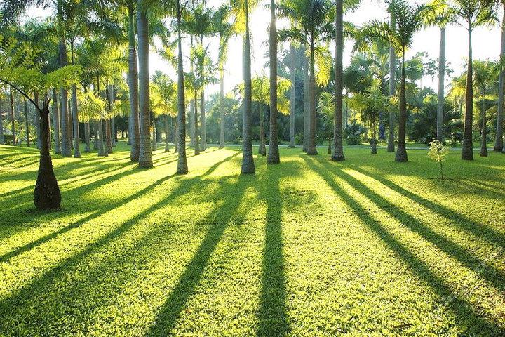 西双版纳勐仑植物园1日游