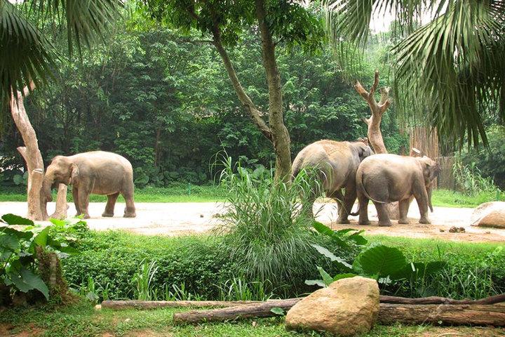 广州长隆旅游度假区-野生动物园 鳄鱼公园