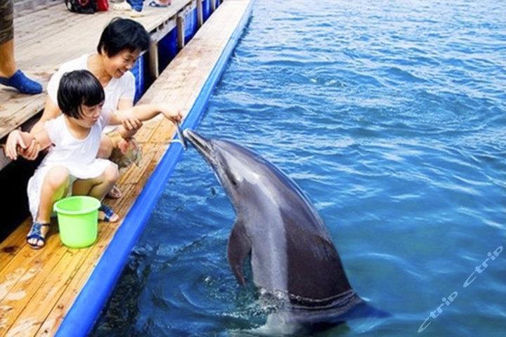 陵水分界洲岛门票+海豚表演门票团购-三亚景点