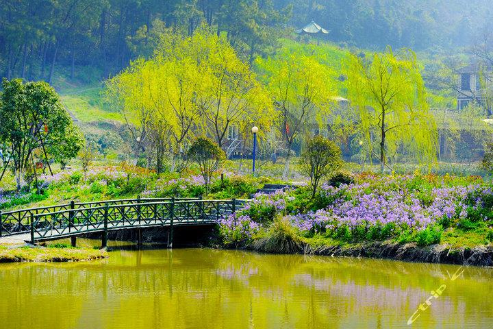 杭州同家乡村乐园(湖景房)图片