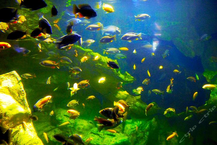 鼓浪屿联票海底世界便宜价格 厦门鼓浪屿质量