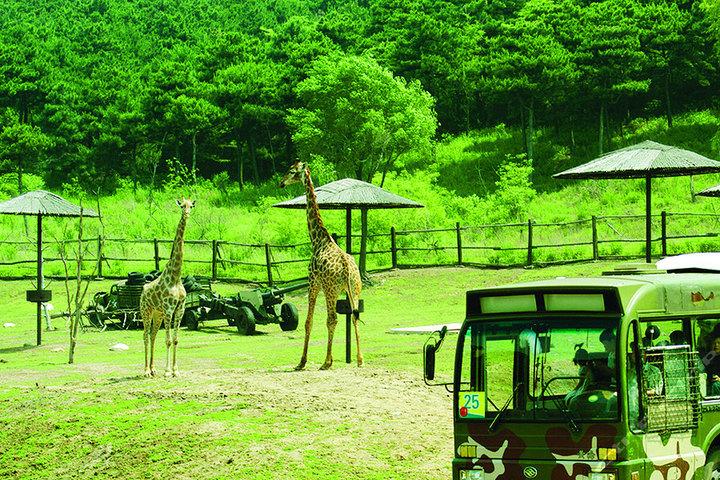 棋盘山森林野生qq怎么弄指定红包园—长颈鹿