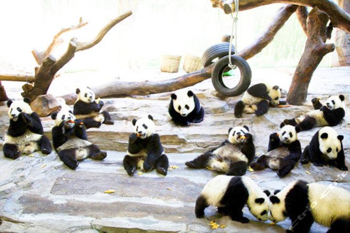 尊享广州长隆野生动物园成人门票1张 广州长隆大马戏成人门票1张!