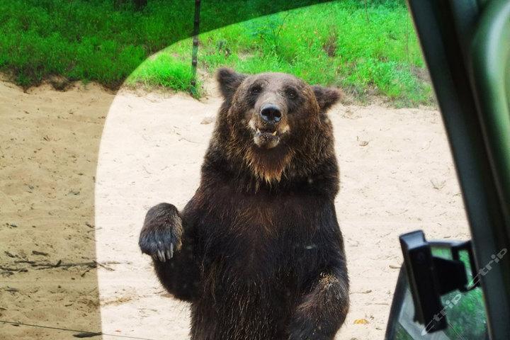 北戴河野生动物园