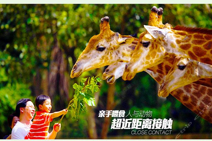 广州长隆野生动物园(鳄鱼公园套票)团购-广州景点