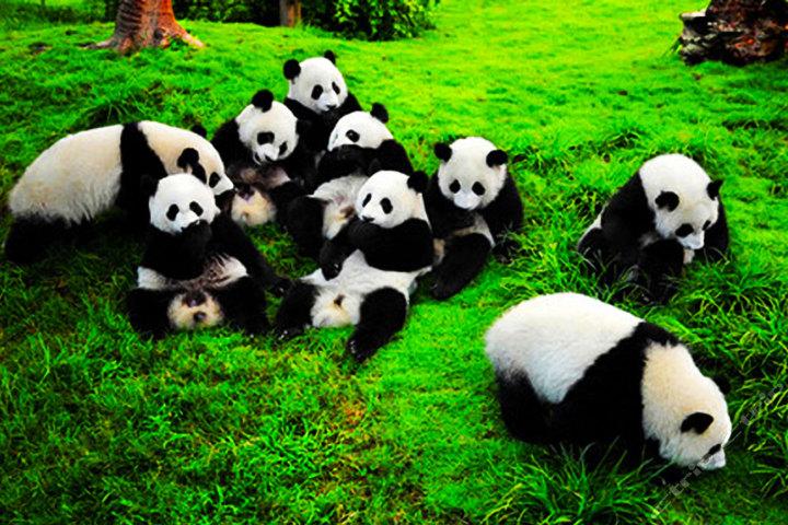 七巧板图案动物熊猫