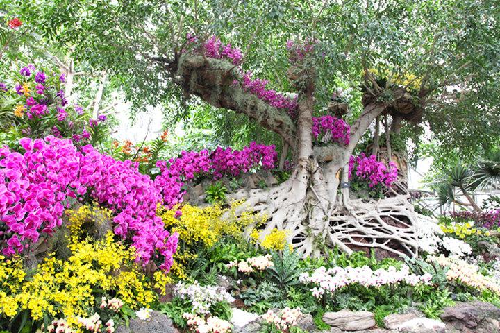 上海辰山植物园(国际兰花展电子门票2张)