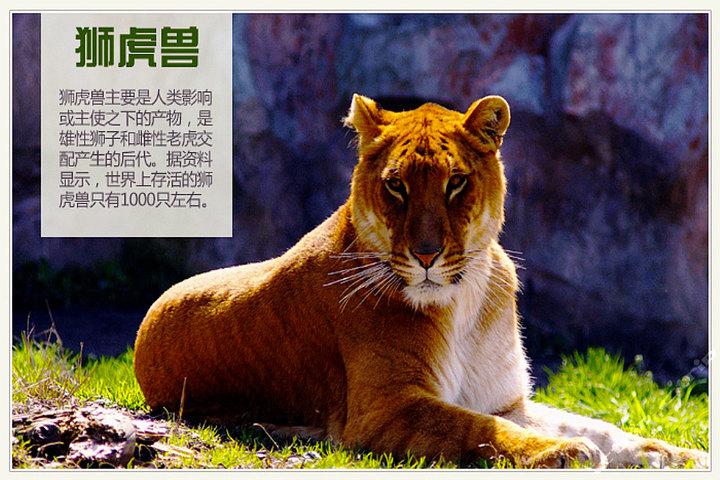 深圳野生动物园(门票)