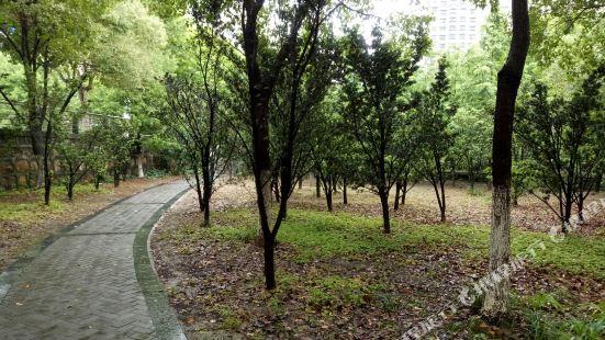 蘇州綠袖子公寓