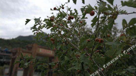 Shidu Jinyuan Farmhouse