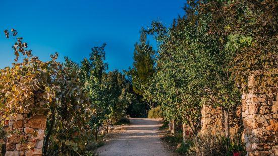 Tur Sinai Organic Farm Resort