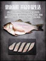 国内精选特产店(珠海斗门白蕉海鲈鱼5条)