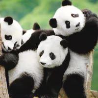 长隆酒店(广州长隆野生动物世界店)长隆野生动物世界+飞鸟乐园两日全票