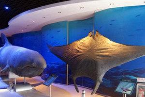 青岛海底世界(2人通票)