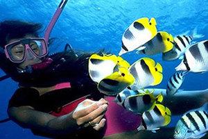 青岛海底世界通票+乘船海上观光门票1人次